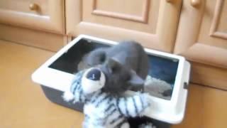 Прикольные видео про кошек,приколы животных смотреть всем