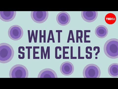 What are stem cells? - Craig A. Kohn