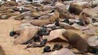 cape seal colony