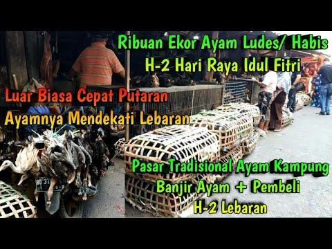 WoW !!! H-2 LEBARAN Harga Ayam Kampung Meroket Tinggi di Pasar Tradisional Ribuan Ekor Ayam Habis
