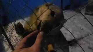[Зверинец] Коты и собаки кушают хлеб