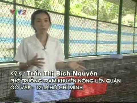 KH&CN – Kỹ thuật chăn nuôi thỏ.