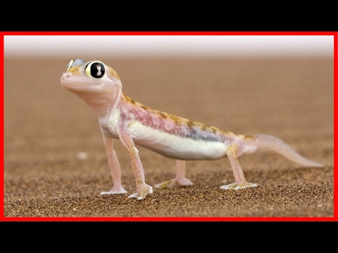 Animal Secret Abilities: Lizard Survived In The Jungle - Wildlife Documentary