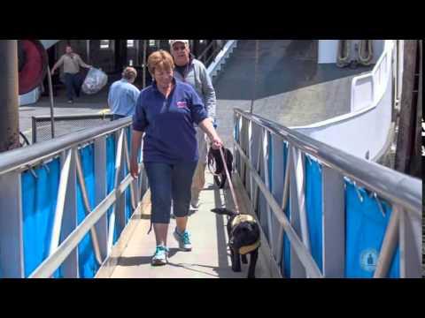 Spotlight - Guide Dog Foundation