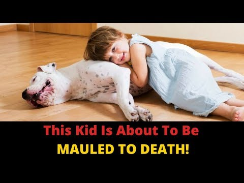 why-do-dogs-bite-children?-parents,-you-can-prevent-dog-attacks-in-kids!