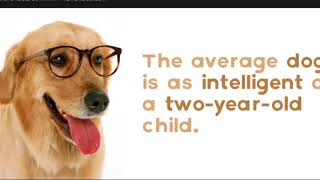 12 Interesting Facts About Dogs