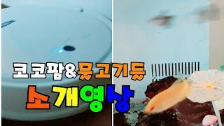 로봇청소기 코코팜&물고기들 소개