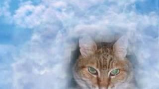 Памяти кота Лапсика