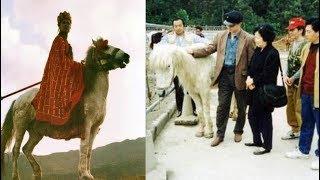 Số phận thê thảm ít người biết của chú ngựa Bạch Long Mã hậu Tây Du Ký 1986