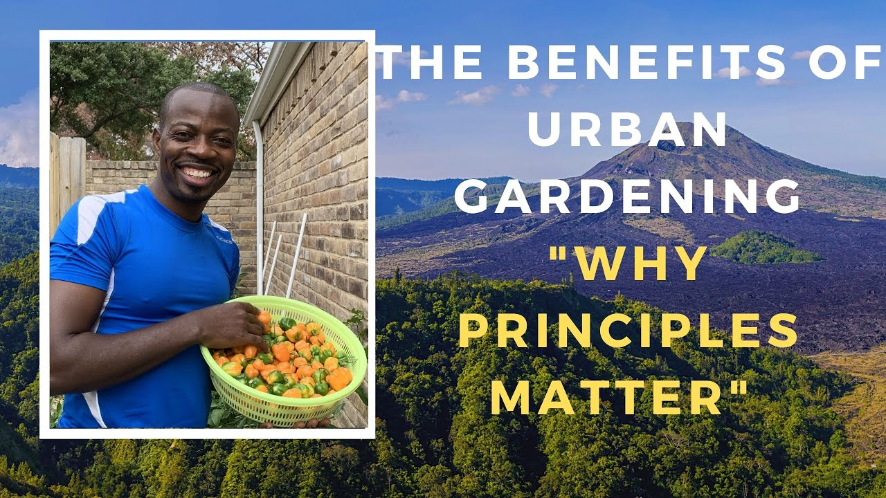 How to make the most in urban gardening