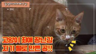 고양이 최애 장난감 자기 털로 만든 털공!!! 헤어볼!…