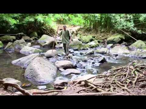 WALKABOUT  Lost In Hawaii Film Tour