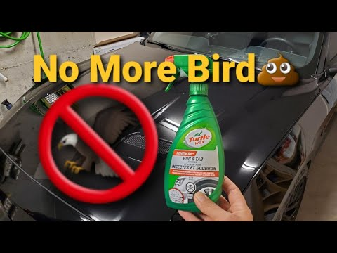 How To Easily Remove Bugs, Bird Droppings And Tar From Your Car *Turtle Wax Bug & Tar Remover*