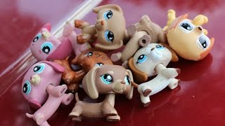 Lps Collection: Dachshunds