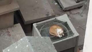 Le360.ma • vidéo insolite: Il n'y a pas de quoi fouetter un chat !