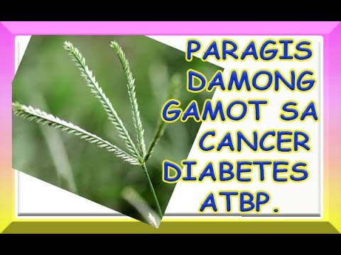 Paragis Miracle Grass Cures Cancer Diabetes Hypertension More Youtube