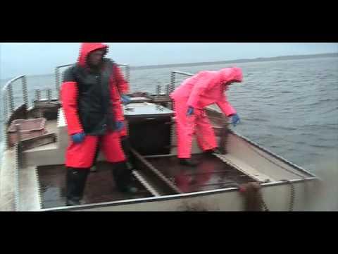ловим судака на чудском озере
