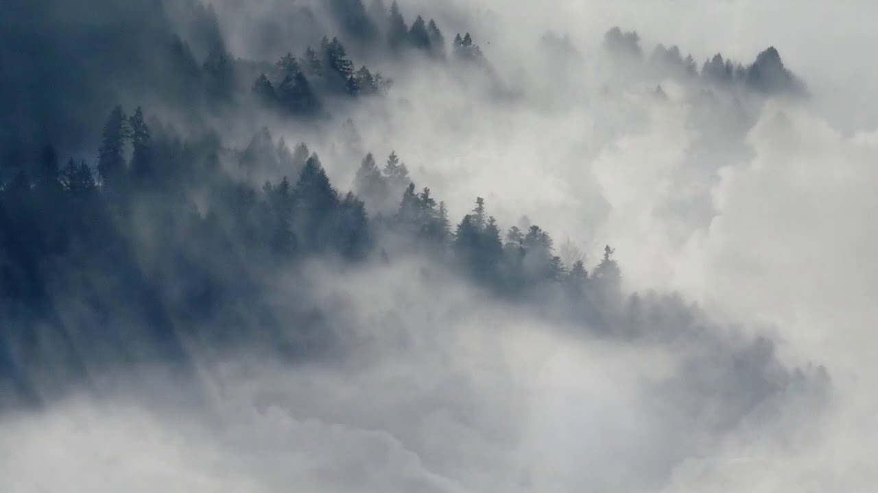 """FREEDIO: """"Misty forest aerial view"""" royalty free HD stock ..."""