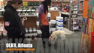 No More Jumping On People! Even When They Encourage It! | Labrador Retriever | Dog Training Atlanta