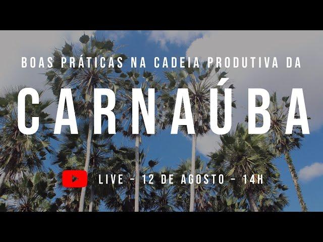 Boas práticas na cadeia produtiva da Carnaúba