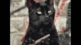 Вот это да! коты умеют пилить ногти.
