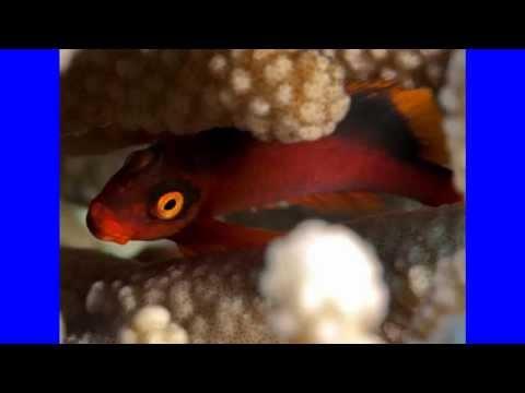 Pitcairn Island - UK (HD1080p)