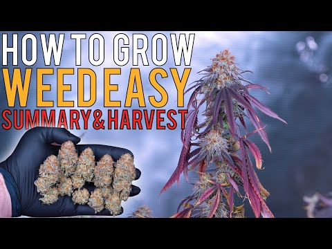 HOW TO GROW WEED EASILY (PHOTOPERIODS) FULL GROW SUMMARY & HARVEST RESULTS | 680W 5X5