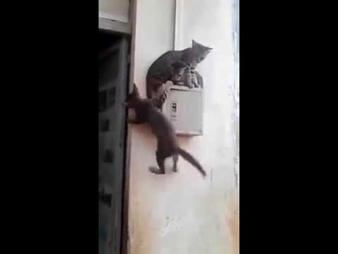 Funny Cat  قط ظريف Chat marrant