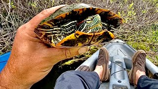 Catching Turtles For The Bathtub Pond {Kayaking With The Family}