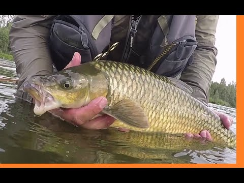Fly Fishing For Yellow Fish In The Vaal River!