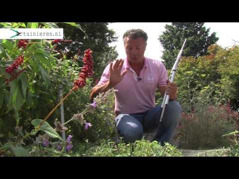 Planten verpotten en verzorgen  Tuinierennl  Doovi