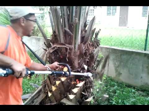 Oil palm pruner, oil palm harvesters, Mesin Kelapa Sawit MORI 03