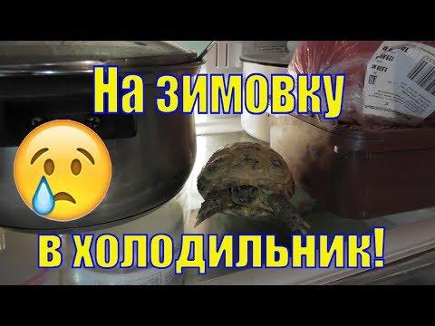 Вопрос: Почему черепаха если замерзает то прячится и спит?