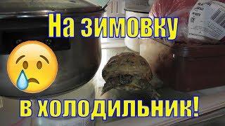 Как подготовить черепаху к спячке/ Спячка у черепах