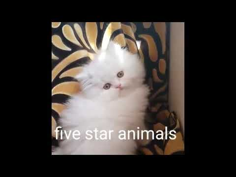 Be sure to watch the cute cat❤
