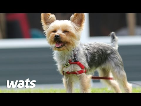 Top 10 Small Breed dogs  - Best Of Ten