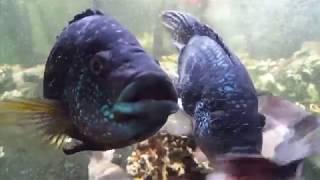 Aквариумные рыбки резвятся в ресторане!