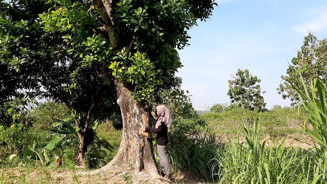 Masak di Desa || Buat Pasung, Cemilan yang Manis Rasanya, Biasanya ada di Berkat Kenduri