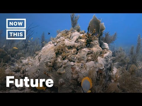 How OceanX Scientists Are Fighting Florida Coral Reef Loss | NowThis