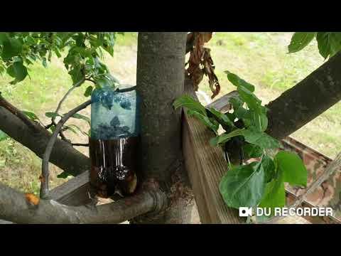 Домик на дереве часть2