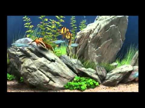 Dream Aquarium Screensaver Hd