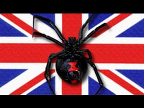 Black Widow and Her 100 Babies Terrorize U.K. Factory