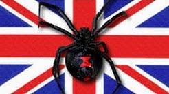 Black Widow and Her 100 Babies Terrorize U.K. Factory
