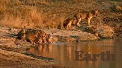 WildEarth - Sunrise Safari - 7 May 2020