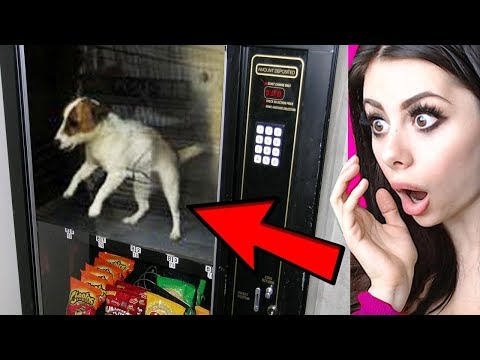 Unbelievable VENDING MACHINES From Around the World !