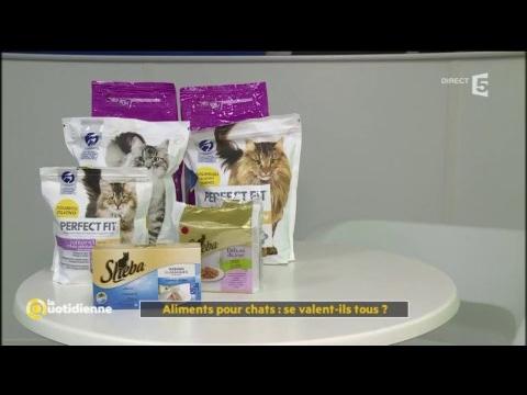 Aliments Pour Chats : Se Valent-ils Tous ? - La Quotidienne
