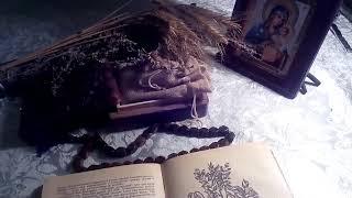 Пустырник обыкновенный (трава), описание и лечебное применение.