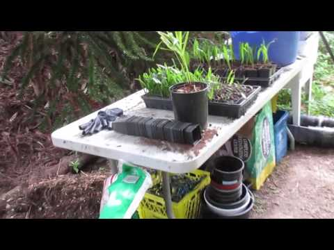 How to Transplant Palm Seedlings into Pots