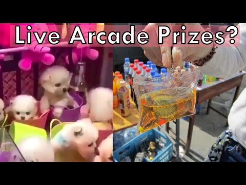 Is China Using REAL Animals In Arcade Games?