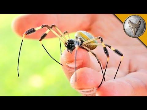Thumbnail: WILL IT BITE?! - BIG CREEPY SPIDER!
